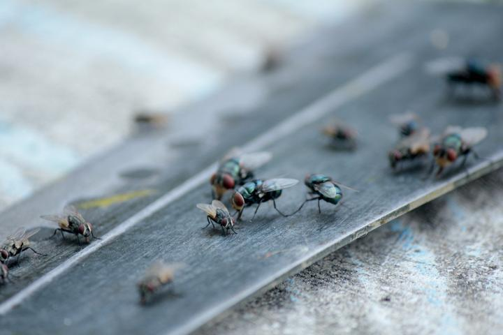 Know the Main Reason Why Pests Keep Coming Back Into your Home